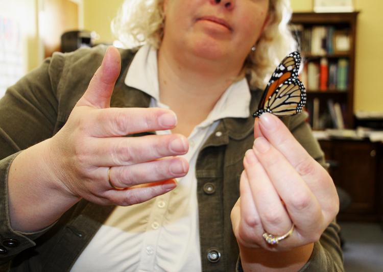 butterflyslide1