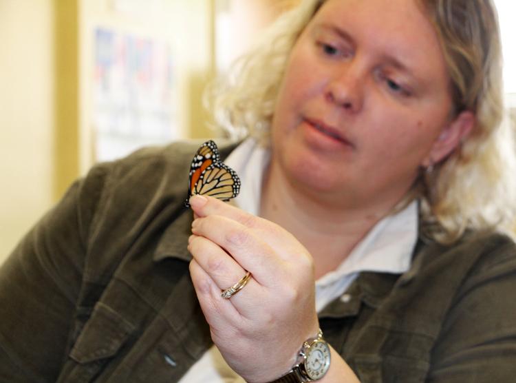 butterflyslide3